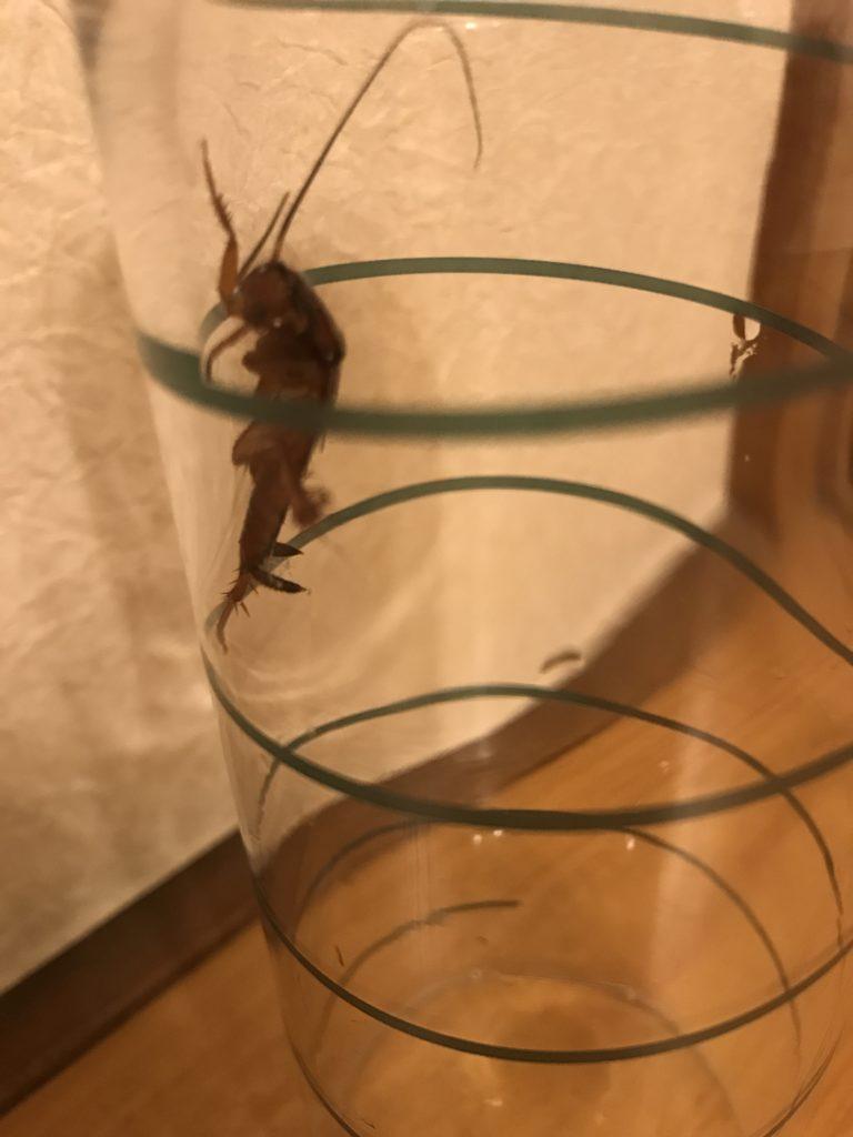 逃げるゴキブリ