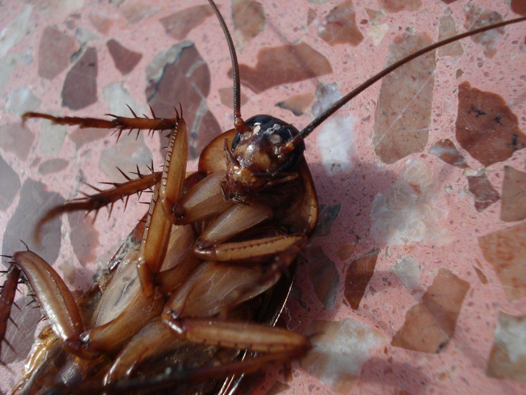 ゴキブリ 死亡