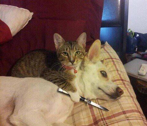犬を脅す猫