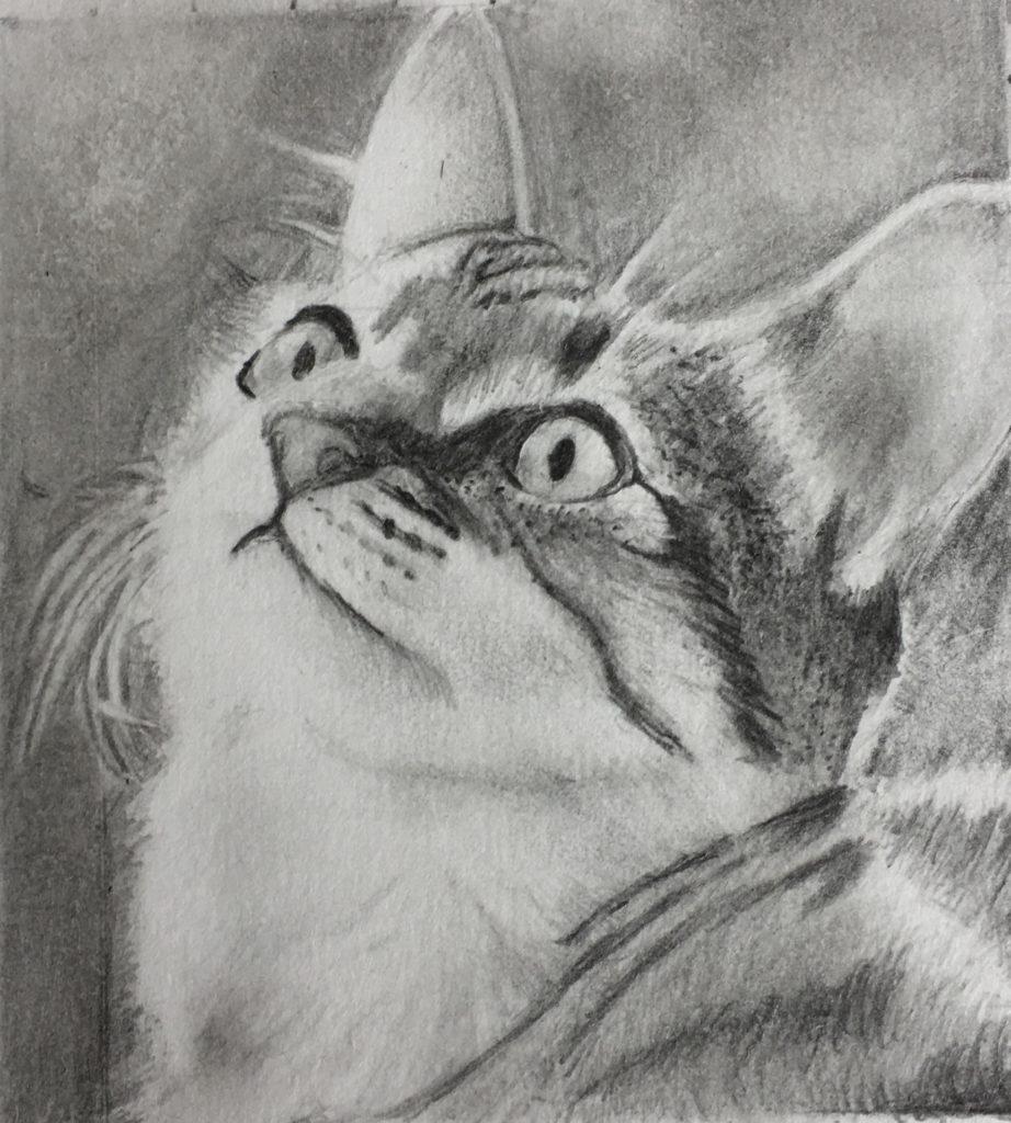 >>1の猫