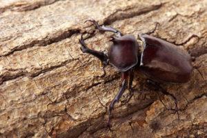 カブトムシとゴキブリ