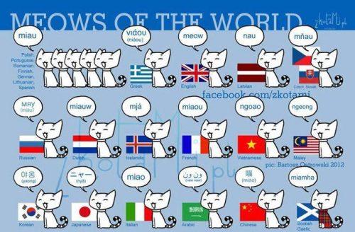 各国の猫の鳴き声