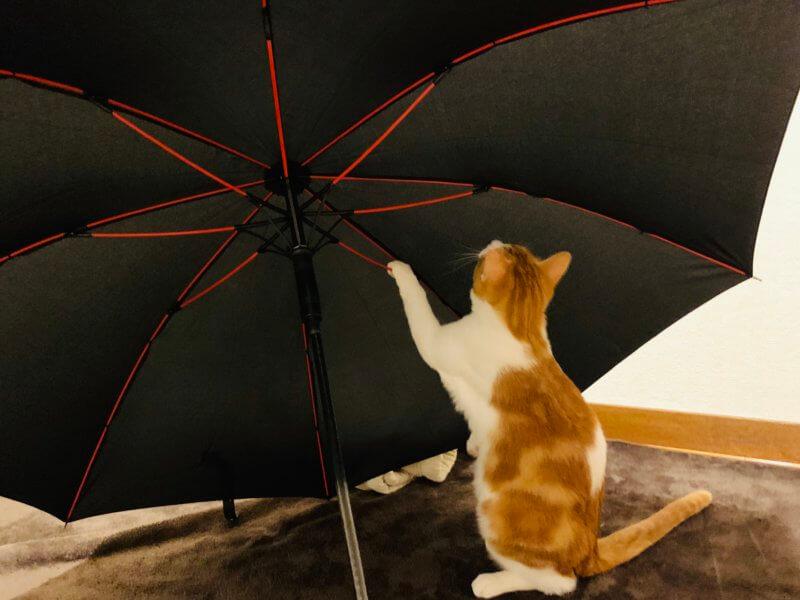 anntrueの傘と猫の比較